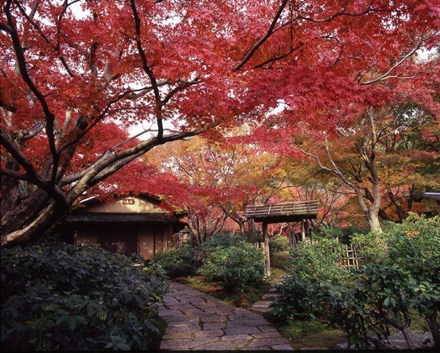 azblog, outono, koyo, Osaka