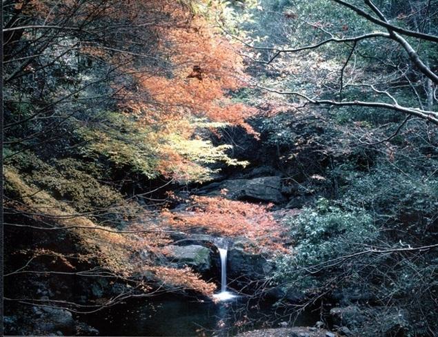 azblog, outono, kouyo, koyo, Osaka