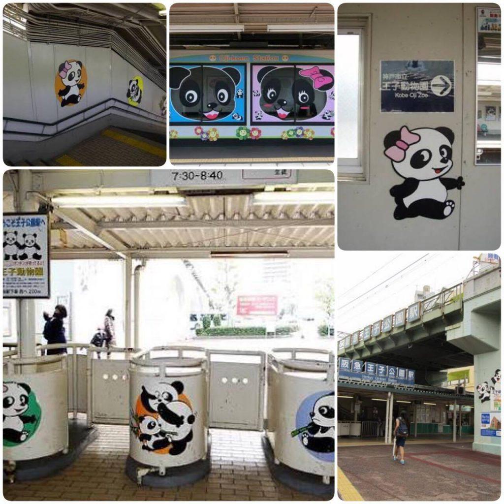 Kobe Oji Zoo, panda Tan Tan, azblog, azblogjapao