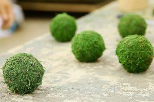 moss, musgo, hoshinchu air bonsai garden, azblog